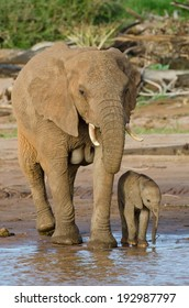 Elephant mother and Baby Drinking at Waters edge