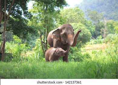 elephant mother and baby in forest, Thailand