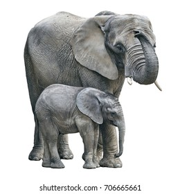 elephant mother and baby on white background. Elephant isolated