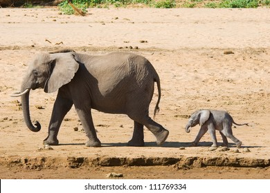 Elephant mother with calf, Samburu, Kenya