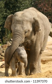 Elephant mother and child playing