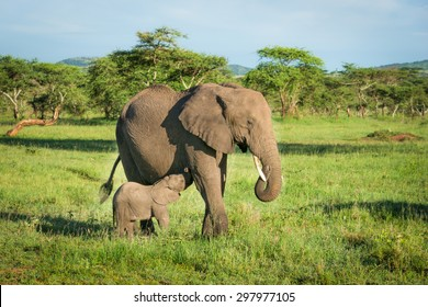 Elephant mother with small baby in african savannah