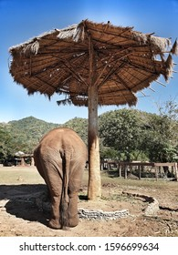 Elephant natural camp, happy free  to roam elephant in natural setting, no chain, no force.