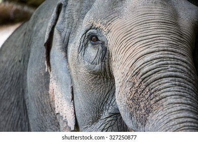 The elephant in nature