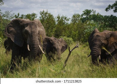 Elephant in the nature of Africa