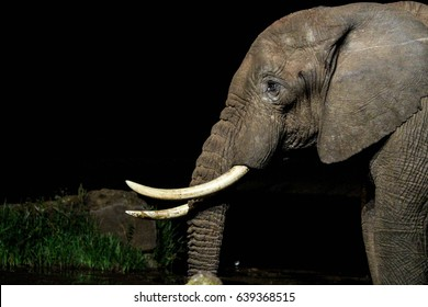 Elephant at night