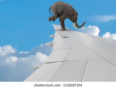 elephant on airplane wing
