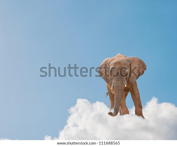 Elephant On Cloud In Sky, Outdoor