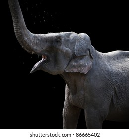 elephant on a dark background