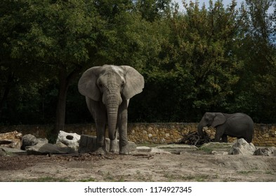 Elephant on natural background
