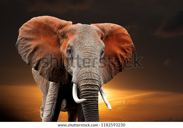 Elephant on sunset in National park of Kenya, Africa