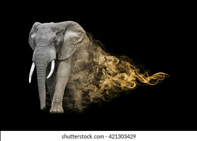 the elephant is one of the big five animals you must see in africa, animal kingdom collection, African wildlife
