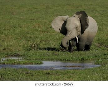 Elephant ot drinking hole