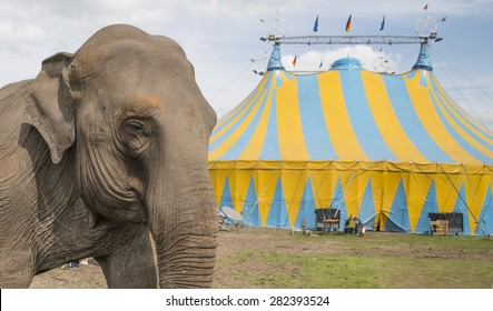 elephant outside circus waiting to perform