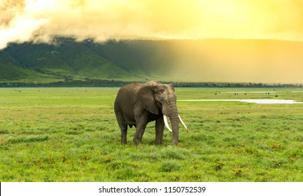 Elephant passing with the high slope of the ngorongoro crater in the back and the sun illuminating the scene