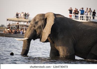elephant photografed by tourist on ferry