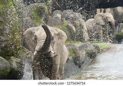 Elephant playing game