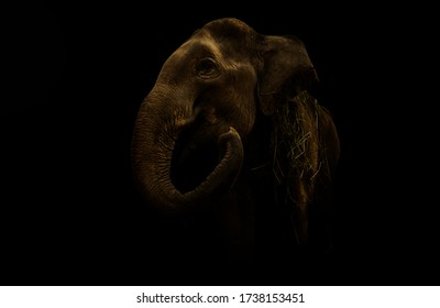 Elephant portrait scenery dark photography