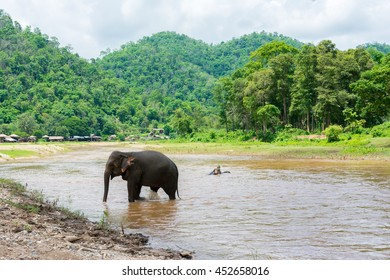Elephant in protected nature park near Chiang Mai, Thailand