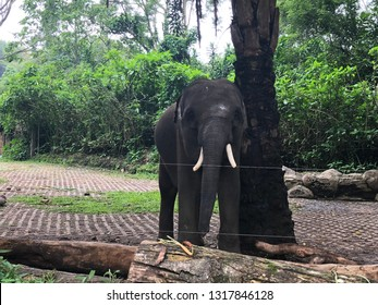 Elephant in Safari Garden Indonesia
