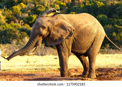 Elephant shaking his body at the watering hole