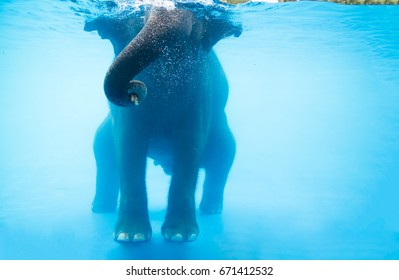 Elephant showing under the water at Safari park, Thailand.