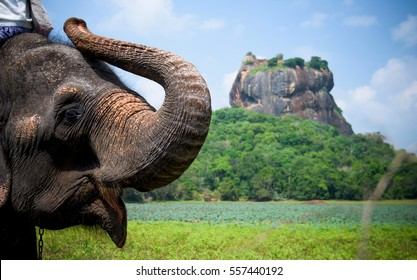 Elephant in Sigiriya lion rock fortress, Sri Lanka