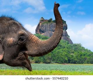 Elephant in Sigiriya lion rock fortress, Sri Lanka