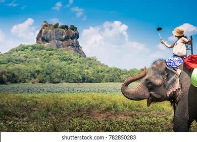 Elephant in Sigiriya lion rock, Sri Lanka