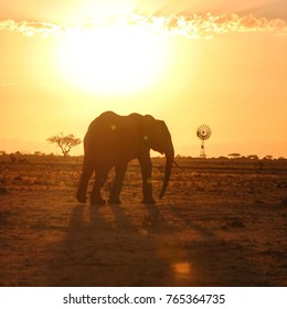 Elephant Silhouette Landscape