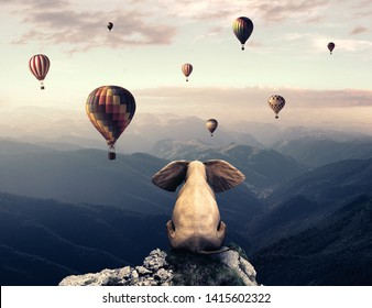 Elephant sits on top of a mountain and admire hot air balloons flying above mountains.