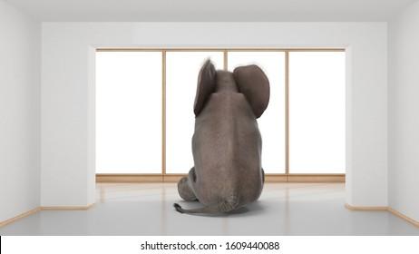 elephant sitting in minimalist room