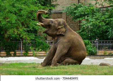Elephant Sitting Images Stock Photos Amp Vectors Shutterstock