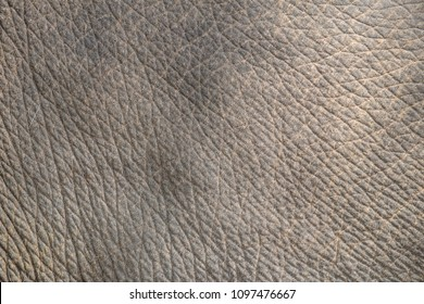 Elephant skin texture abstract background.