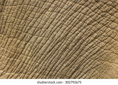 Elephant skin texture background.