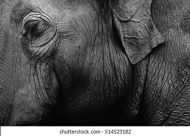 Elephant skin texture monochrome background. Closeup shot