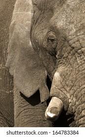 Elephant skin textures