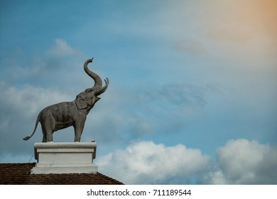 Elephant spin on a beautiful sky background roof.