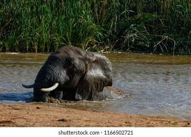 Elephant splashing around in the dam at the watering hole