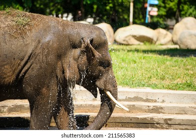 elephant splashing with water