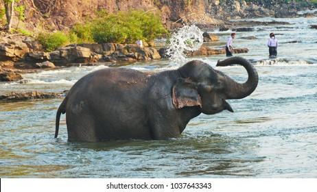 Elephant spraying water; Laos Bolaven plateau