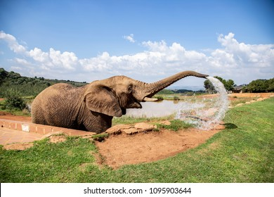 elephant squirting water