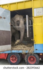 elephant standing in a circus truck trailer, soft focus