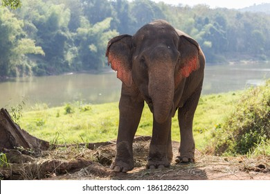 Elephant standing under tree backlit by river in Laos elephant sanctuary