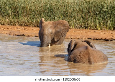 Elephant standing in the water checking out the other elephant