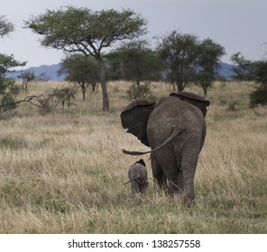 elephant tails
