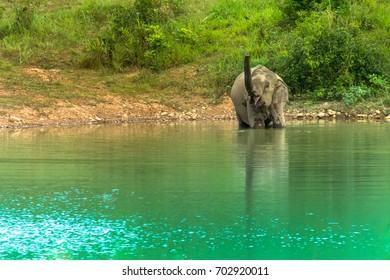 An elephant taking a bath