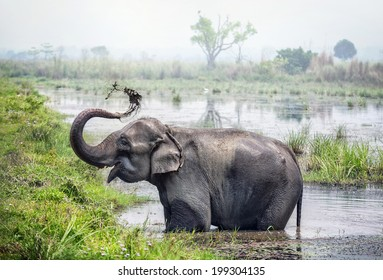 Elephant taking a bath in the river of Chitwan national park, Nepal