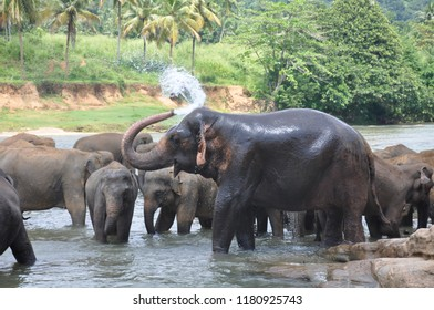 Elephant taking shower at riverside