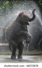 Elephant of Thailand, Animals, Wildlife, Elephant of Asia,Elephant bathing.